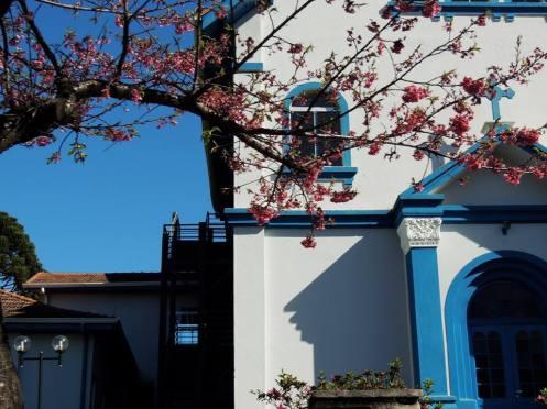 cerejeiras em flor anita garibaldi doris regina teixeira