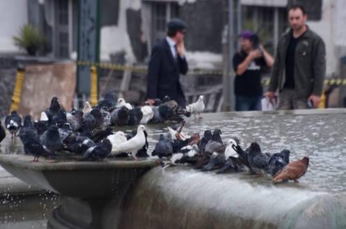 lina e os pombos em fila para o banho